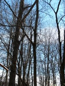 Bare trees of November for web