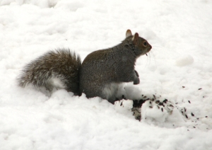 Squirrel with sunflower seeds for web