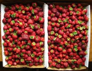Strawberries-2 flats-2014