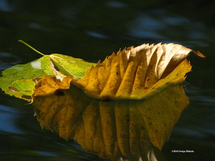 Pomp-floating leaf 2 for web