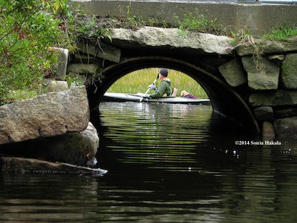 Jay and Goldie through culvert--Goose Pond for web