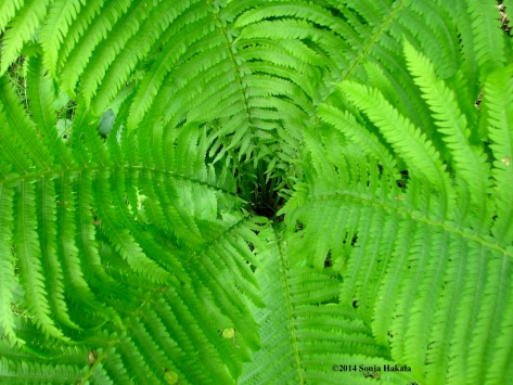 Fern swirl 2 for web
