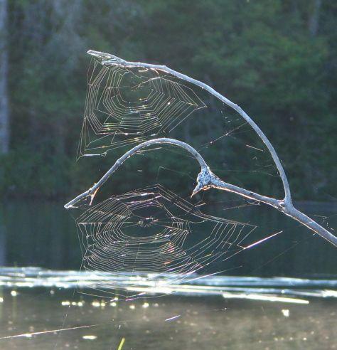 Grafton Pond-2 spider webs copy
