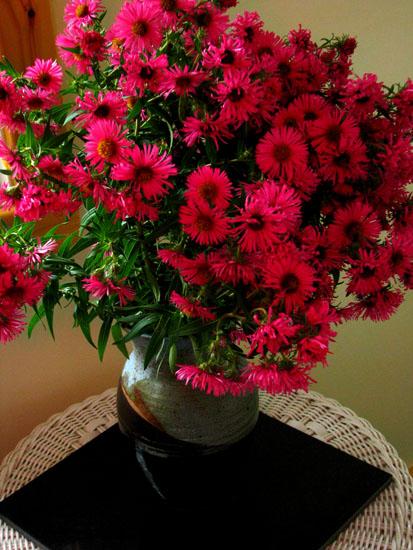 Vase of dark pink asters on porch