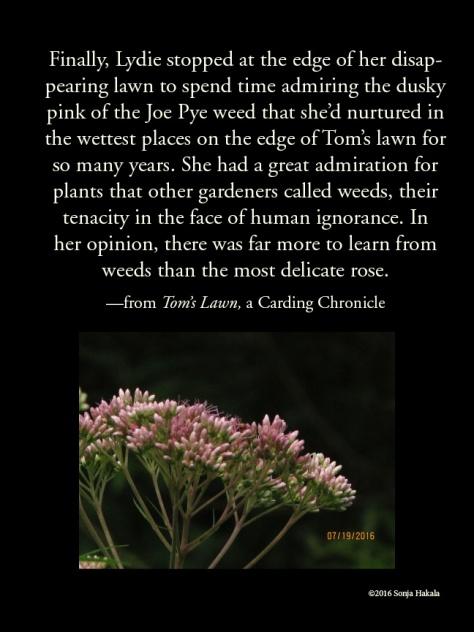 WQ-Joe Pye weed