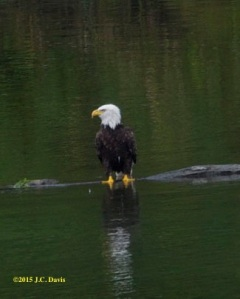 Eagle 2 smaller for web