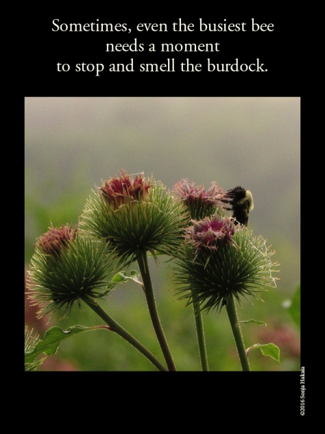 WQ-Bee-Burdock