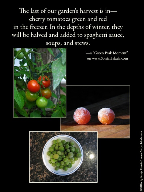 wq-cherry-tomatoes