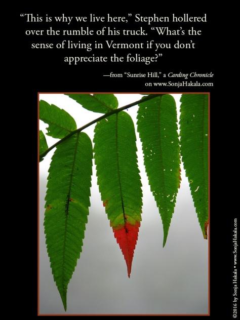 wq-foliage