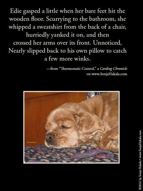 wq-sleeping-dog