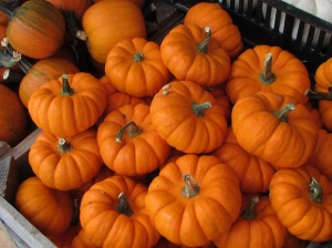 miniature-pumpkins-for-web