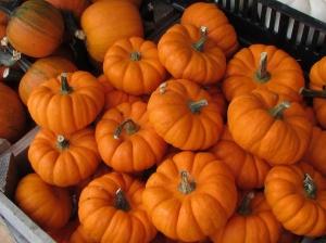 miniature-pumpkins-for-web