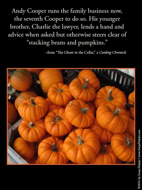 wq-miniature-pumpkins