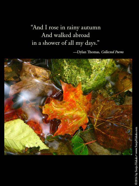 wq-rainy-autumn