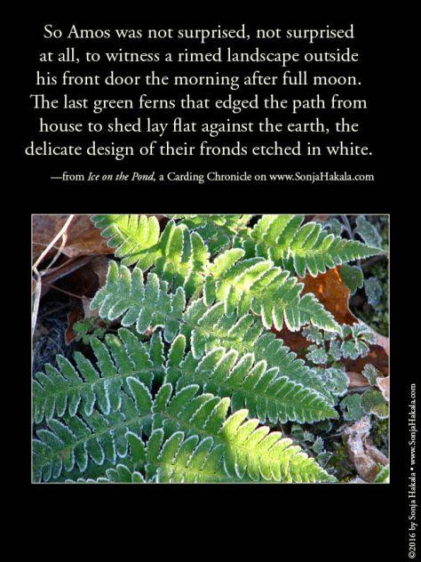 wq-rimed-ferns