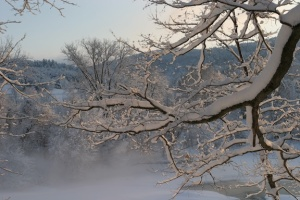 maple-branch-in-snow-for-web