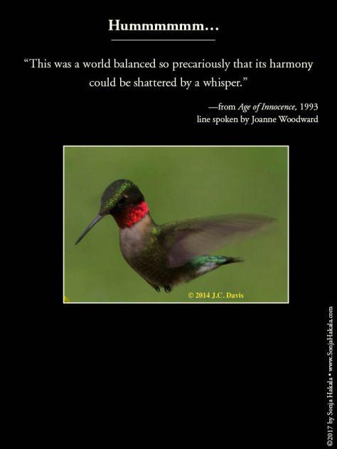 wq-hummingbird