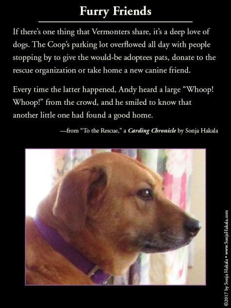 wq-dog-rescue