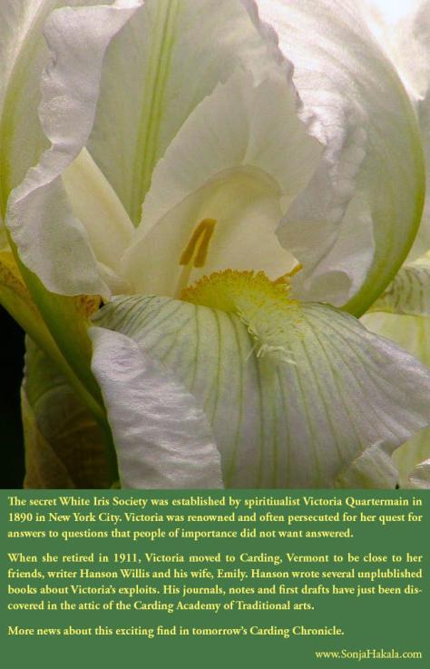SH-White Iris 1