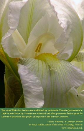 SH-White Iris 2