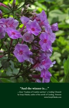 SH-Garden Phlox