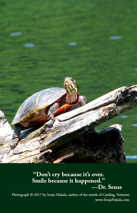 SH-Smiling Turtle