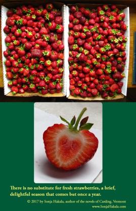 SH-Strawberries