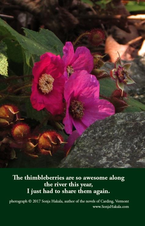 SH-Thimbleberry 2
