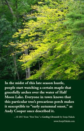 SH-first tree
