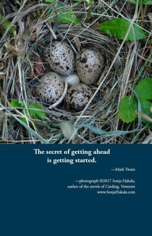 SH-birds eggs