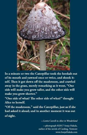 SH-mushroom