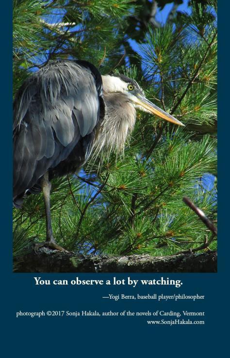 SH-roosting heron