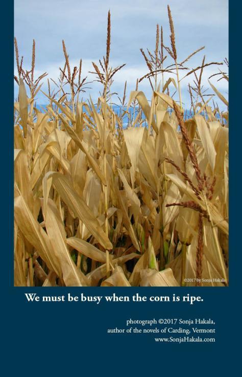 SH-harvest