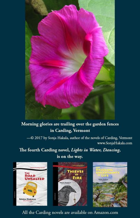 SH-morning glories