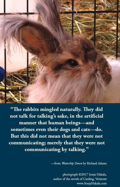 SH-rabbit