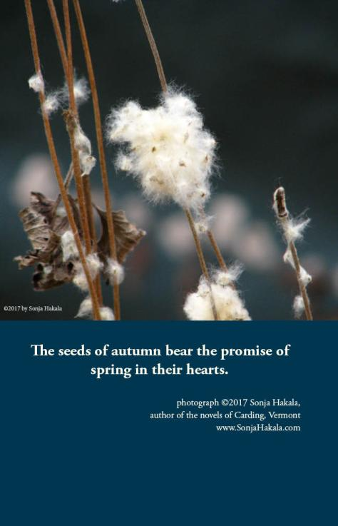 SH-seeds of autumn