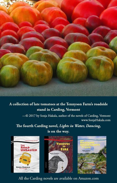 SH-Tennyson tomatoes
