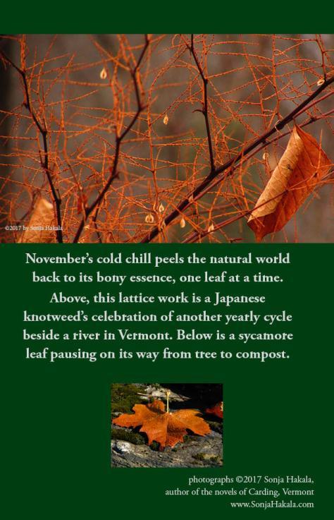 SH-Japanese knotweed lattice