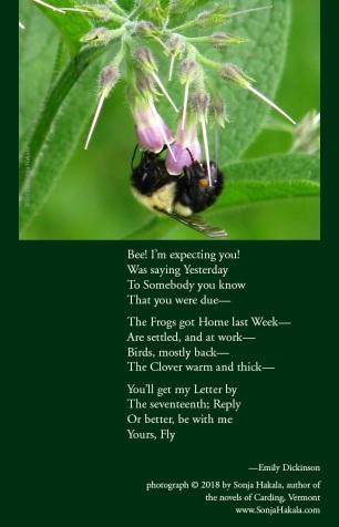 SH-bee poetry