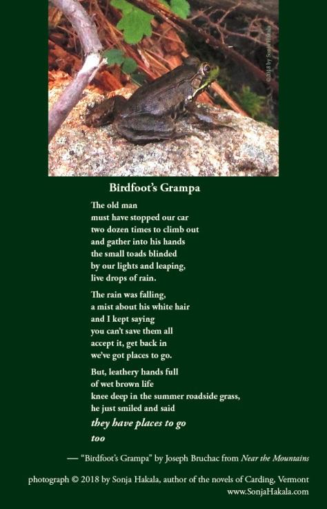 SH-frog poetry