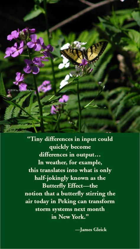 SH-Butterfly effect