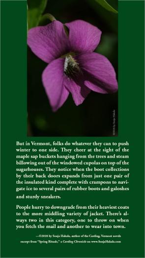 SH-Violets
