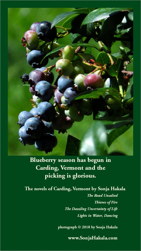 SH-blueberry season