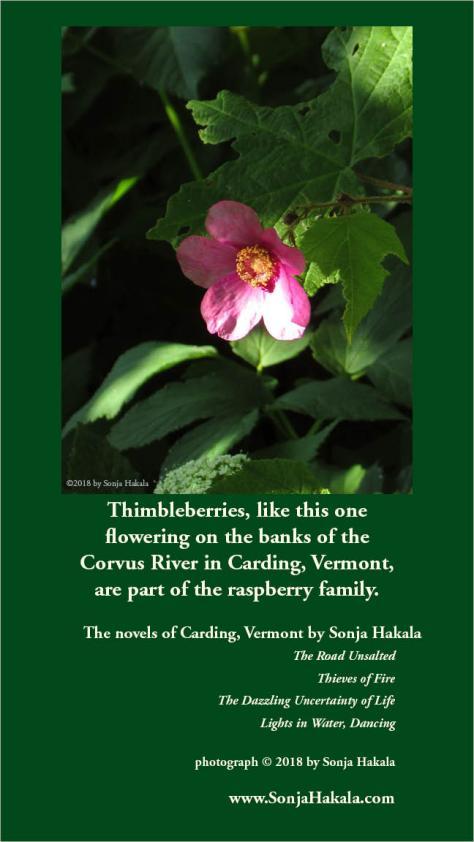 SH-Thimbleberry flower