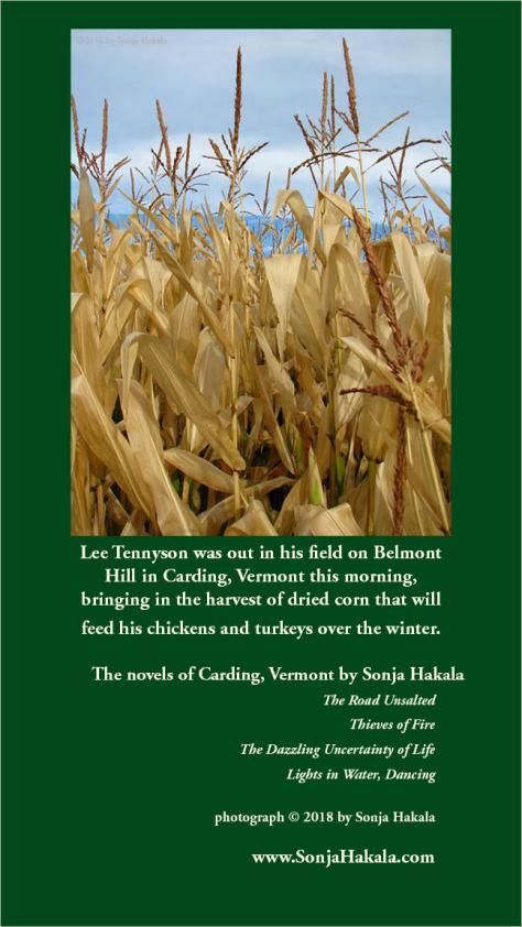 SH-dried corn