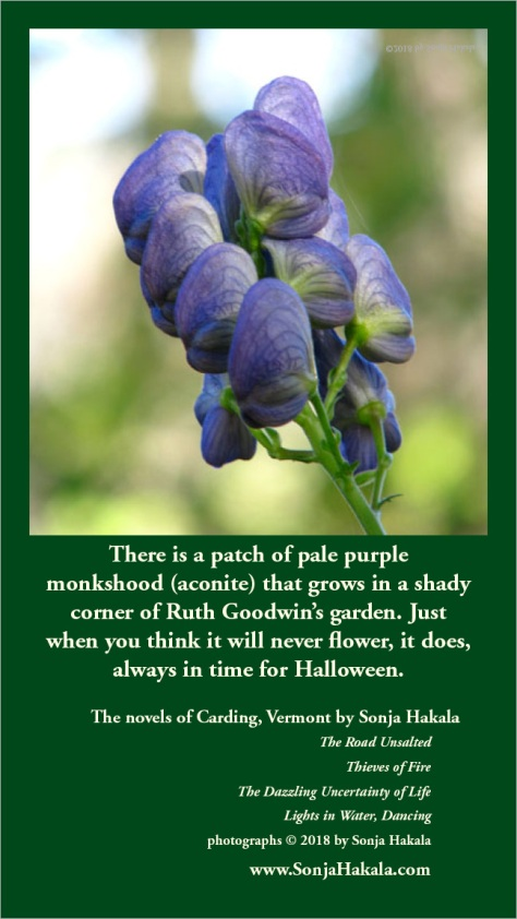 SH-monkshood