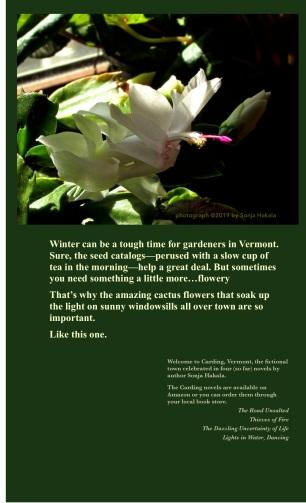 SH-cactus flower