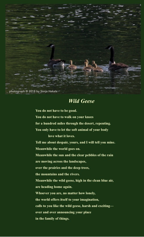 sh-for mary oliver