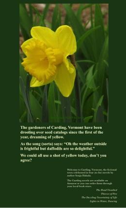 sh-yellow daffodils