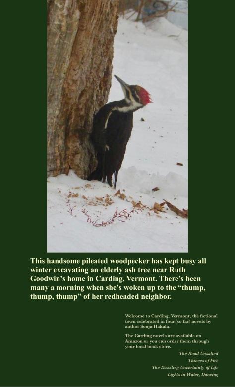 SH-pilated woodpecker